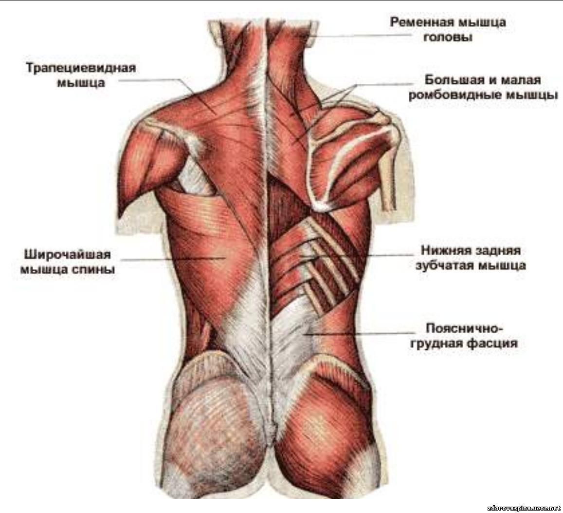 Укрепление мышц груди 25 фотография